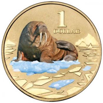 2013 $1 Uncirculated Coloured Coin Polar Animals - Walrus