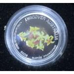2008 Australian 1/10oz Platinum Coin Frangipani